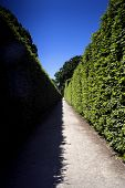 pic of symmetry  - Shadows in the park create contrast symmetry - JPG