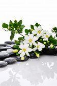 stock photo of gardenia  - gardenia with n black pebbles  - JPG