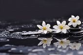 picture of gardenia  - Still life with three gardenia on black pebbles  - JPG