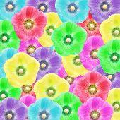 image of hollyhock  - exotic color hollyhock flower as nature background - JPG