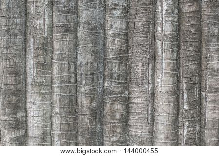 Texture Of Coconut Or Palm Tree Bark For Background