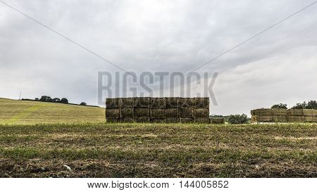 green alfalfa bales pile in a field