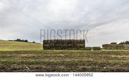green alfalfa bales pile in a field