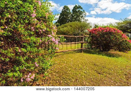 fence with flowers under a blue sky