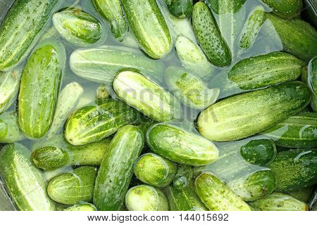 ripe cucumbers are washed in the water before preservation