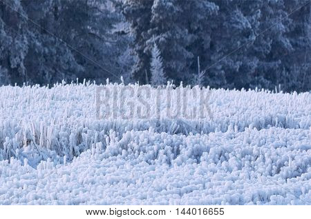 Winter Frost On Trees
