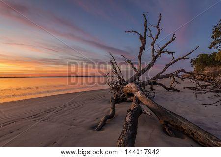 Dawn On Driftwood Beach - Jekyll Island