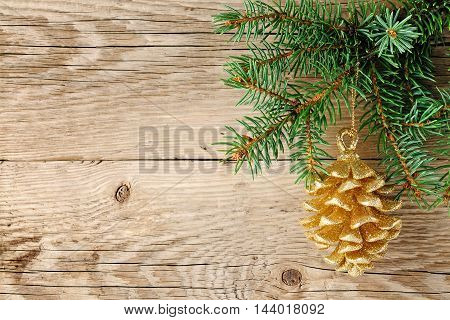 Christmas decoration golden pine cone on spruce branch