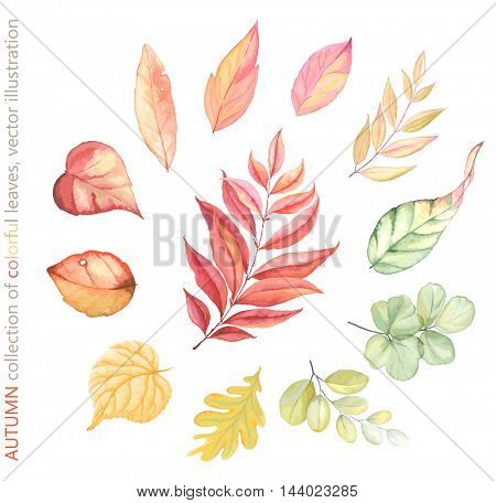Autumn collection of colorful leaves, vector illustration in vintage style for your design.