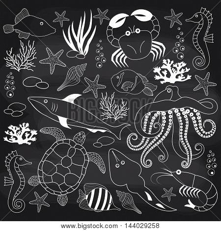 Vector sea life set on chalkboard background