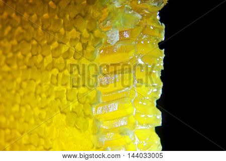 cut comb honey glows on a black background