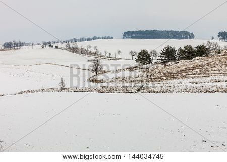 Winter season and seasonal specific. Hilly fields maedows trees covered with white fresh snow. Countryside landscape