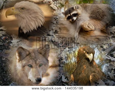 This is a photo of wild animals