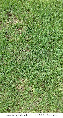 type carpet green grass for web designers