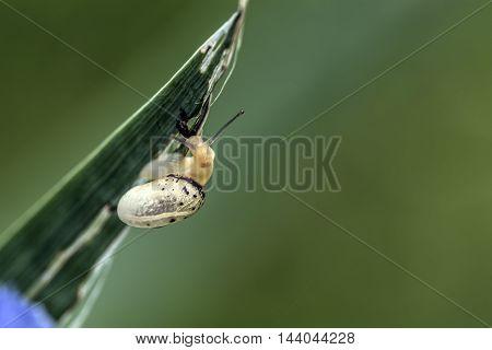 snail on a iris flower leaf outdoor macro closeup