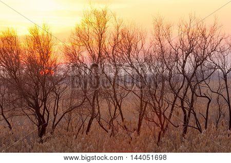 The Steppe In The Winter, The River Or Kazakhstan. Kapchagai Bakanas