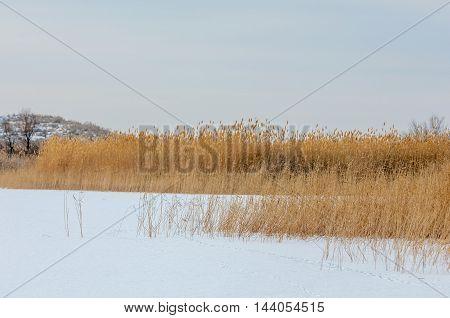 Reeds On A Frozen Lake, The Steppe. The River Or Kazakhstan. Kapchagai Bakanas