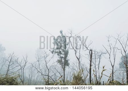Trees in winter, with foggy dark environment