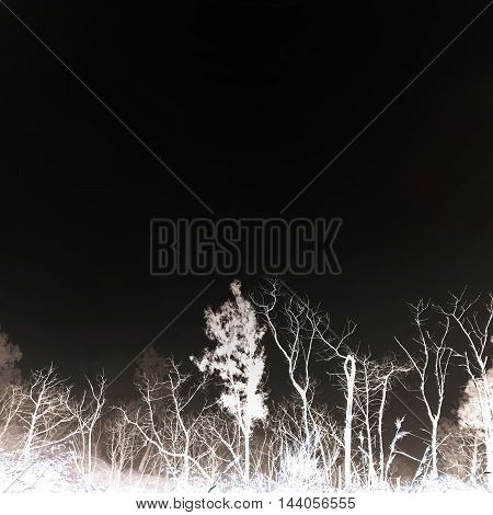 Dead tree branches on black backround, with copy space
