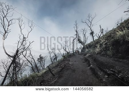 Mysterious dark forest with fog hazy environment in winter