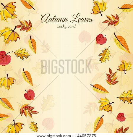 Autumn leaves fall on border vector illustration. Background with hand drawn autumn leaves. Design elements. Autumn leaves concept. Different autumn leaves.