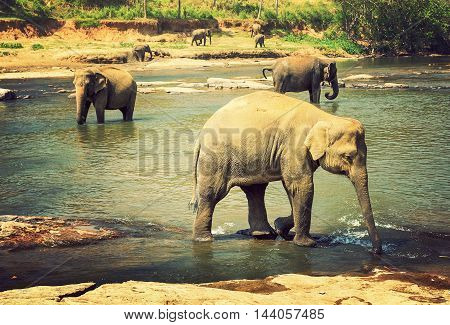 vintage nature background river elephants family asia