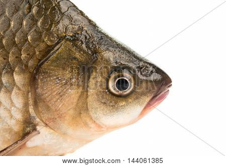 Fresh fish carp on a white background