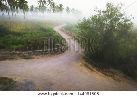 Country road is a winding countrside dirt jungle road surrounded by lush green vegetation on a misty monring day.