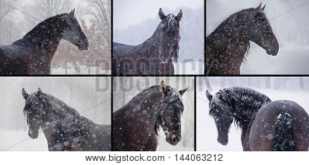 collection of the six portraits of the brown horses in the snow