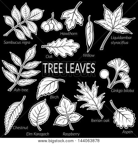Set of Nature Pictograms, Tree Leaves, Oak, Iberian Oak, Raspberry, Willow, Liquidambar, Hawthorn, Aspen, Ginkgo Biloba, Elm Karagach, Birch, Ash-tree, Chestnut and Sambucus. White on Black. Vector