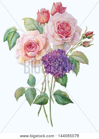 Watercolor hand drawn roses. Isolated organic natural eco illustration on white background