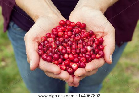 Close up of womans hands holding fresh red lingonberries