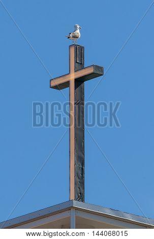 Lesser Black-backed Gull (larus Fuscus) Standing On A Christian Cross