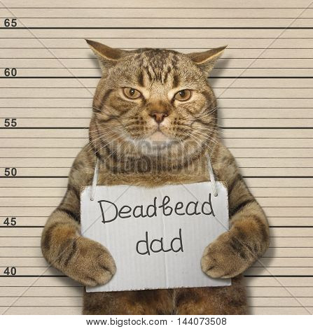 A scottish straight cat is a deadbeat dad.