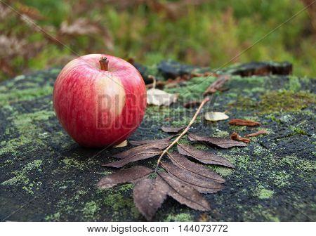 Red ripe apple in autumn orchard on tree stump.