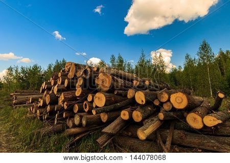 Stack Of Oak Logs