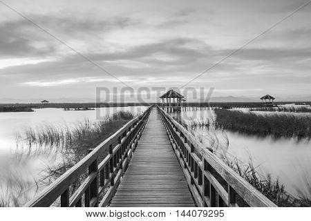 Wooden Bridge in lotus lake on sunset time at Khao Sam Roi Yot National Park Thailand Black and White