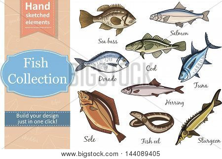 Fish collection Dorado Fish Eel Tuna Salmon Halibut Herring Sea bass Cod Sturgeon. Vector illustration of fish for design menus, recipes and packages product.