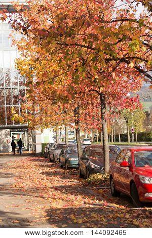 discolored leaves of deciduous trees in autumn - autumn walk