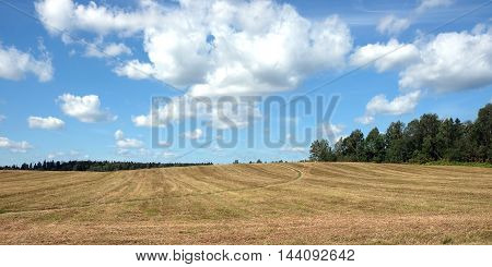 Beautiful rustic landscape with ground road runs through a mowned field under sky with clouds to the forest in sunny summer day panoramic photo