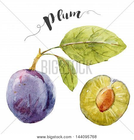 Beautiful image with nice watercolor hand drawn plums