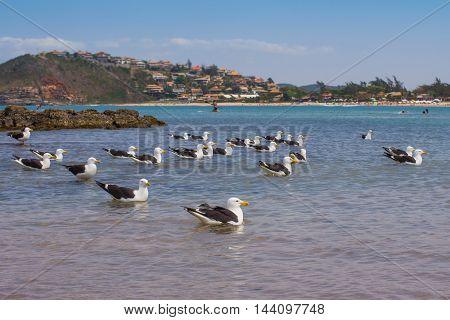 Seagull on the beach. Larus michahellis. Buzios Rio de Janeiro Brazil