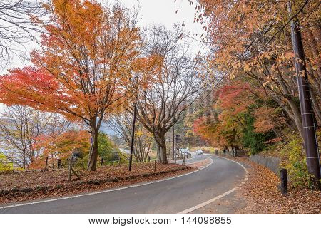Fujikawaguchiko Yamanashi Japan - November 22 2015 : Unidentified tourist visiting the Koyo tunnel at autumn in Kawaguchiko Japan.