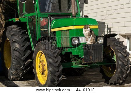 House cat sitting on her favorite place - on a tractor in the sun