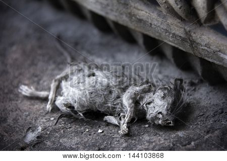 mummified rat on the floor with filter effect