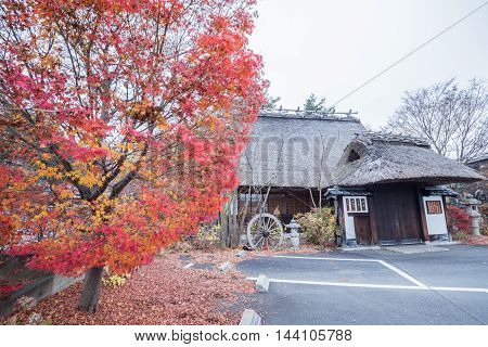 Colorful Autumn tree Leaf Season in Japan