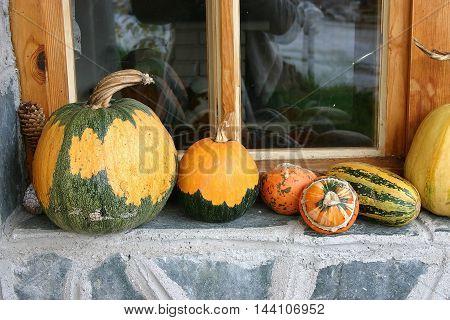 yellow green striped pumpkins on the window