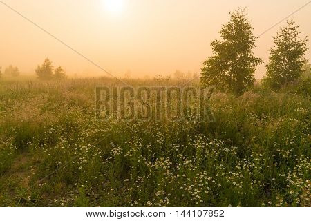 Golden Sunshine Above Countryside Field At Morning