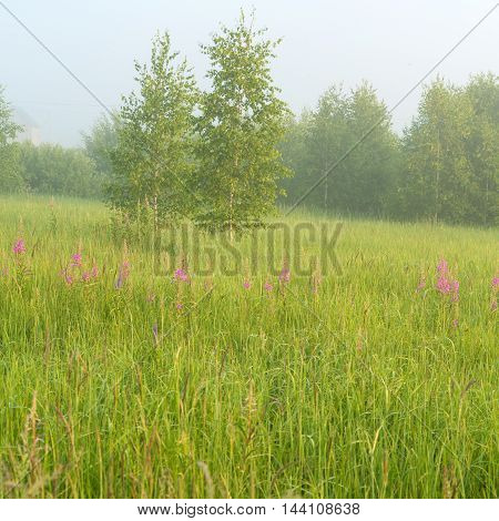 Beautiful Nature Landscape With Foggy Meadow