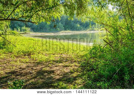 Look through the branches of the trees to the shore of a small lake. It is early in the morning of a sunny day in the summer.